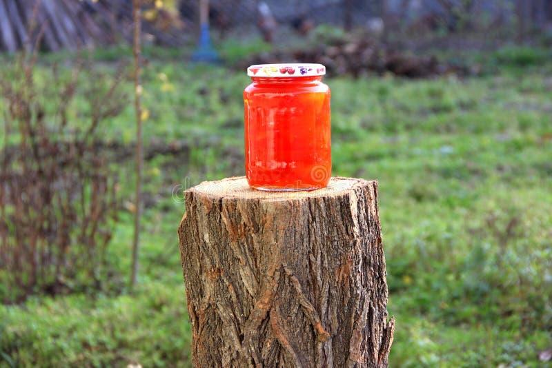 Jardim da amoreira do doce do melaço natural fotos de stock