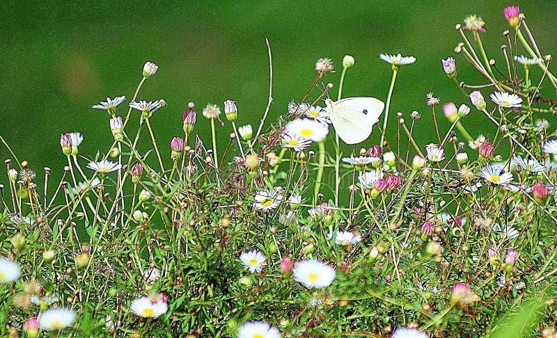 Jardim da borboleta foto de stock