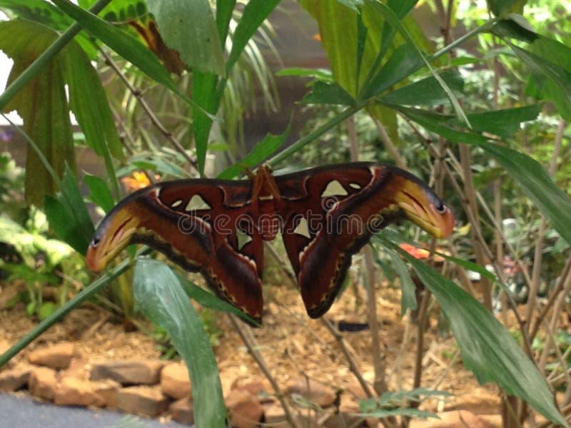 Jardim da borboleta imagens de stock
