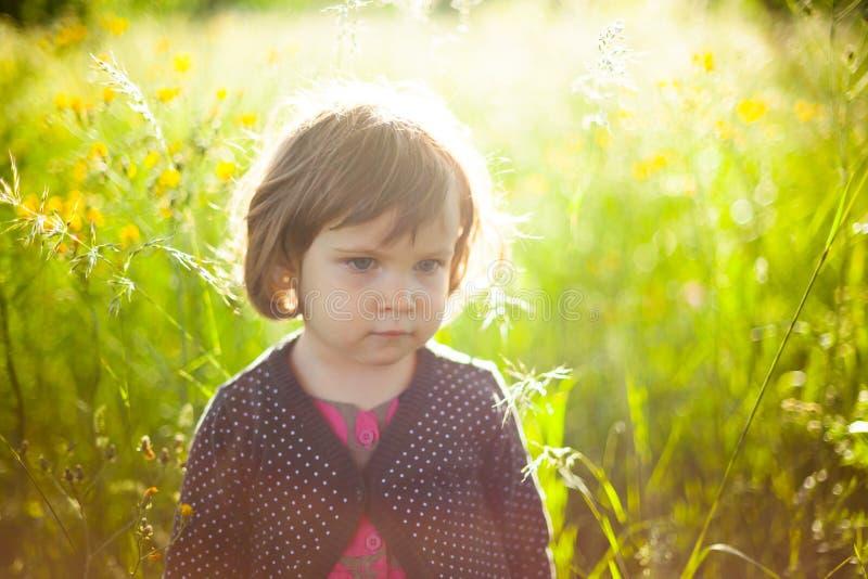 Jardim da luz solar imagem de stock royalty free