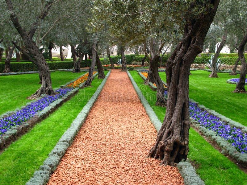 Jardim da oliveira, templo de Bahai, Haifa, Israel imagens de stock royalty free