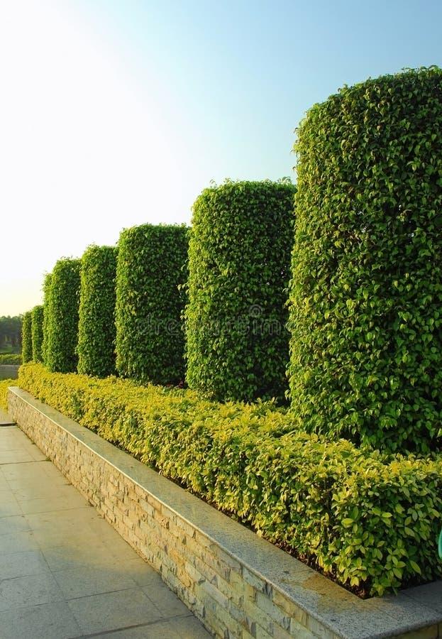 Jardim da planta verde imagens de stock