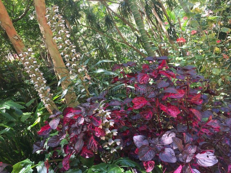 Jardim da selva imagens de stock royalty free