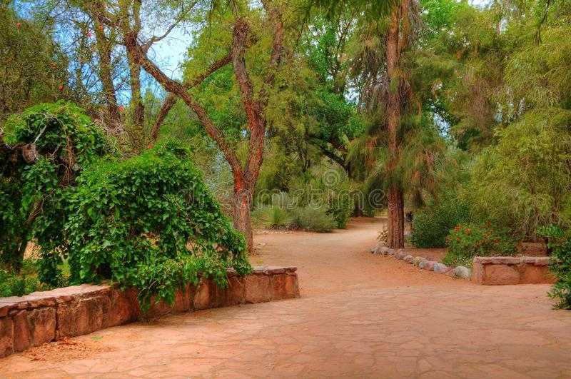 Jardim da selva imagem de stock