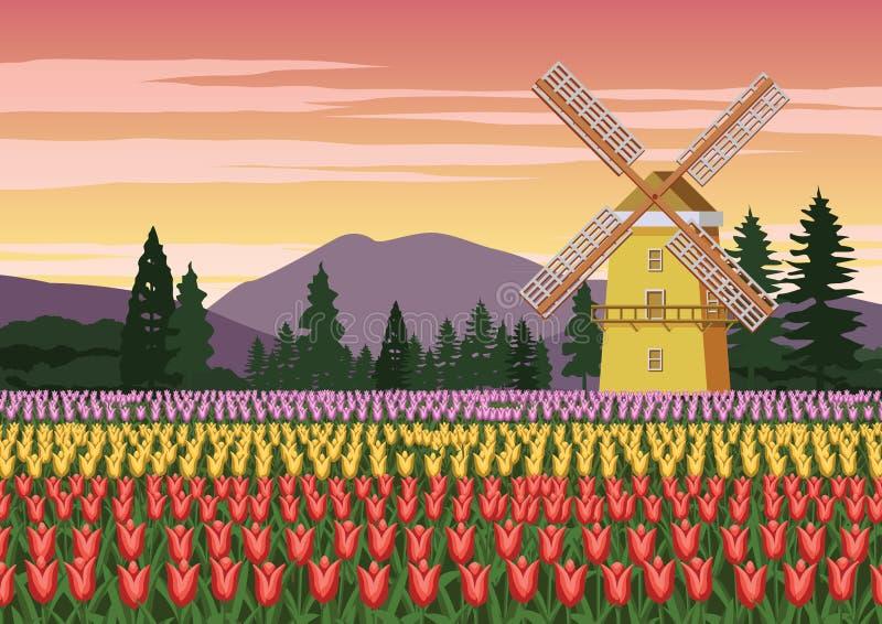 Jardim da tulipa, símbolo famoso da Holanda e moinho de vento ao redor com natureza bonita, cor do vintage ilustração royalty free