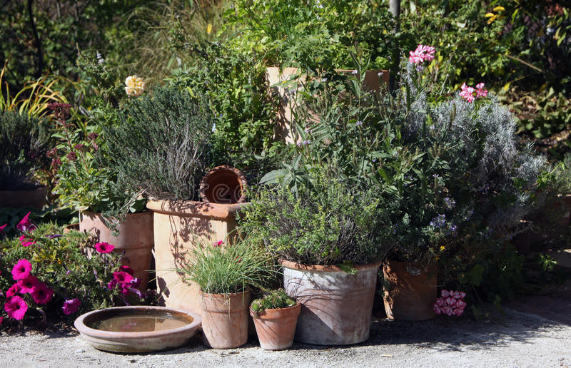 Jardim das ervas e de flores nos potenciômetros imagens de stock royalty free
