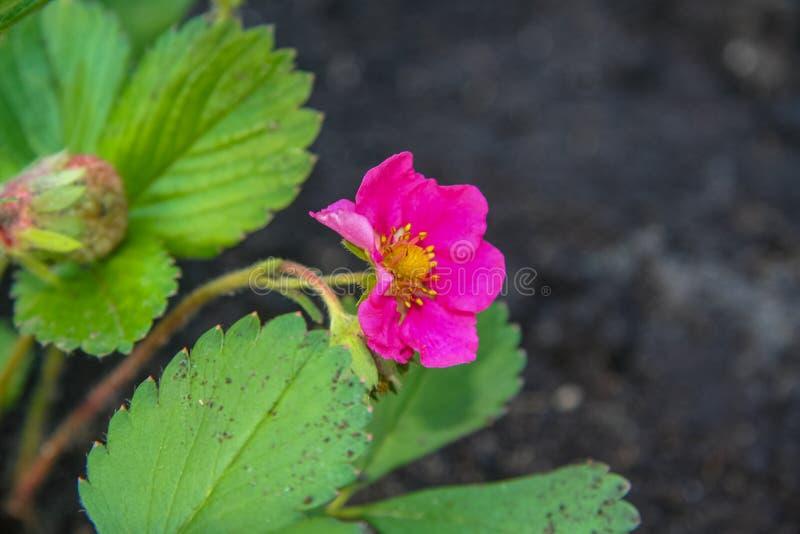 Jardim das flores na primavera em maio foto de stock royalty free