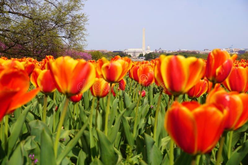 Jardim das tulipas no carrilhão holandês fotos de stock royalty free