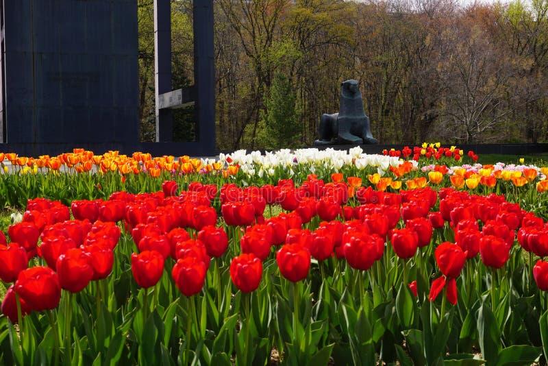 Jardim das tulipas no carrilhão holandês imagens de stock