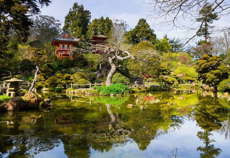 Jardim de chá japonês fotos de stock