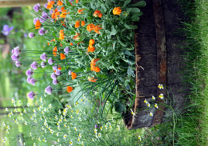 Jardim de erva fotografia de stock