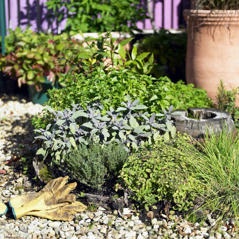 Jardim de erva imagens de stock