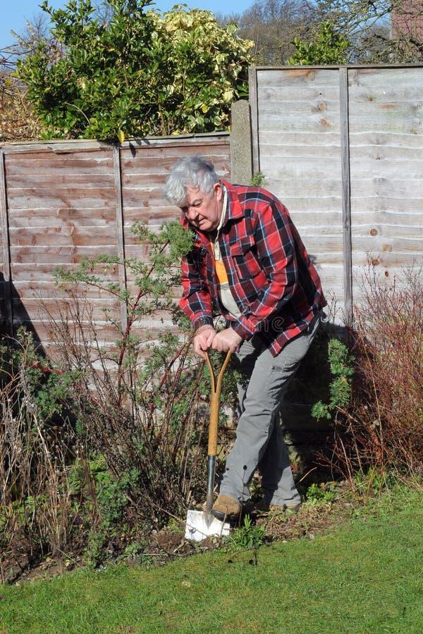 Jardim de escavação do homem idoso. fotografia de stock royalty free