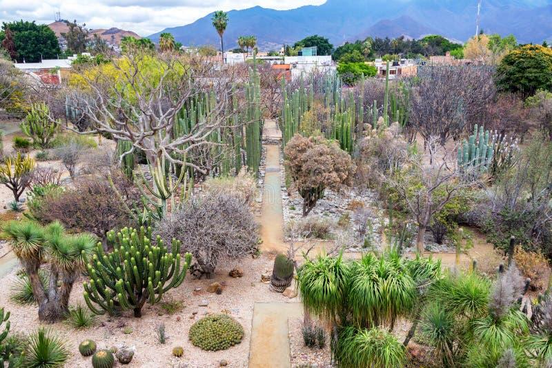 Jardim de Ethnobotanical de Oaxaca foto de stock royalty free