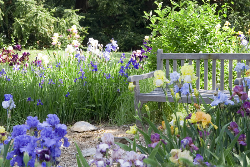 Jardim de flor foto de stock royalty free