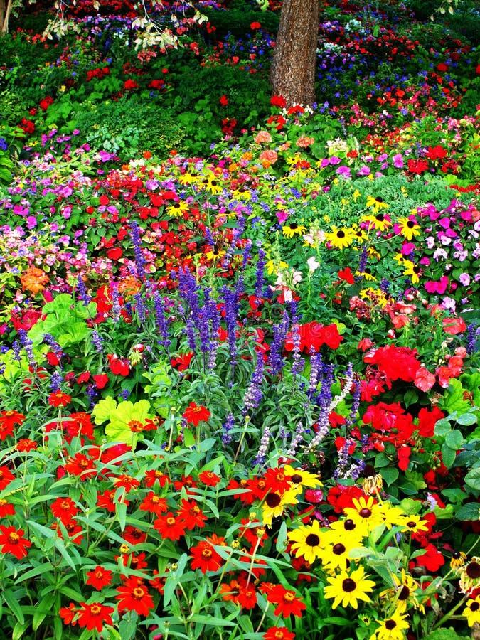 Jardim de flor fotos de stock