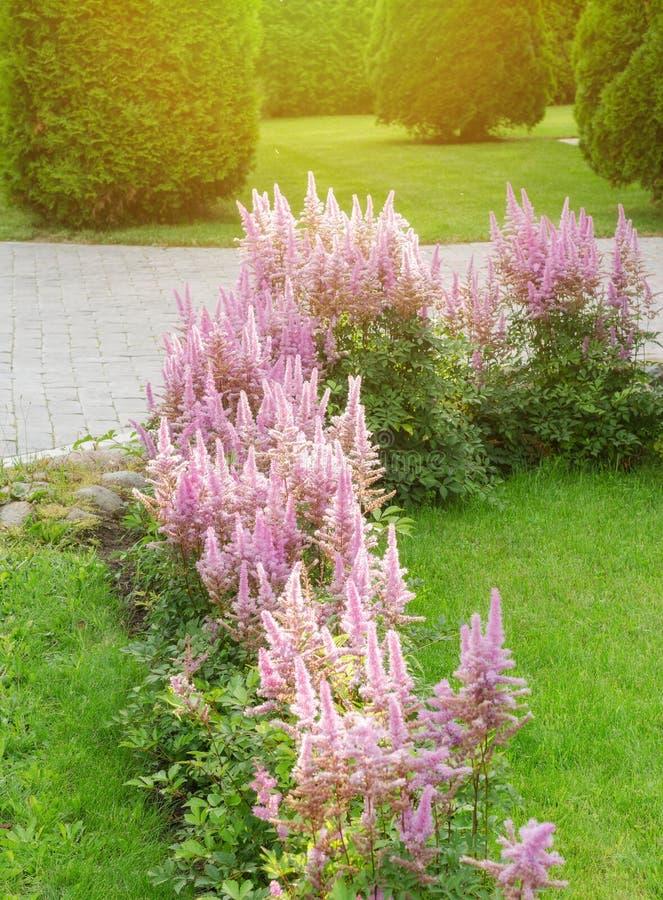 Jardim de flor ajardinado fotos de stock royalty free