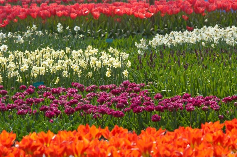 Jardim de flor colorido fotos de stock royalty free