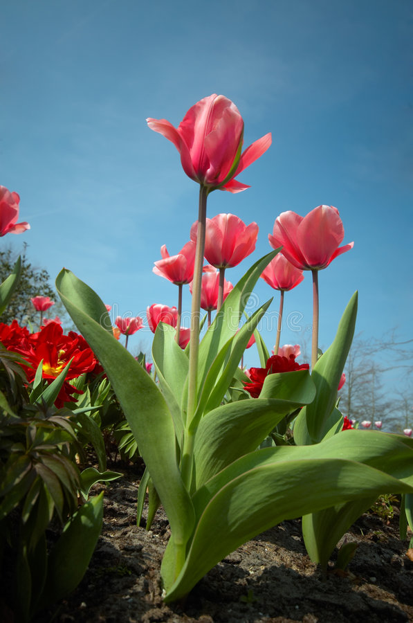 Jardim de flor colorido foto de stock