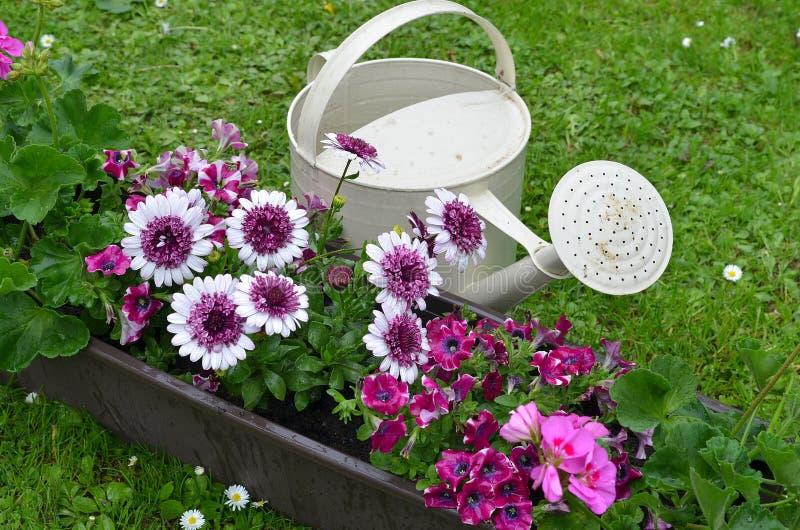 Jardim de flores imagem de stock royalty free