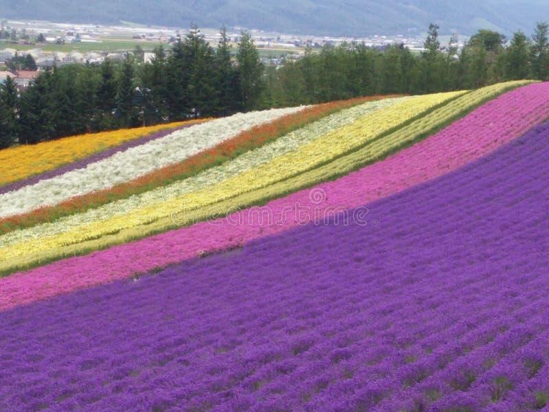 Jardim de flores foto de stock