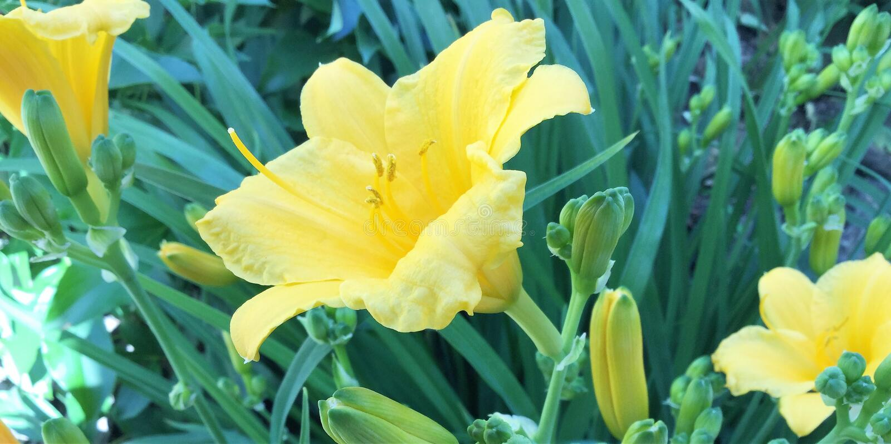 Jardim de flores imagens de stock royalty free