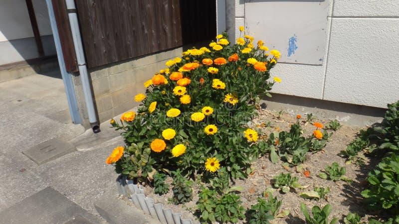 jardim de flores amarelo bonito fotografia de stock
