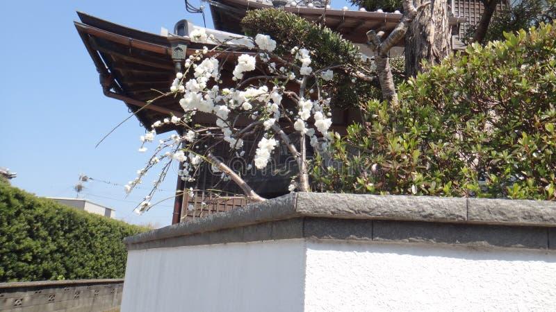 Jardim de flores brancas bonito foto de stock royalty free