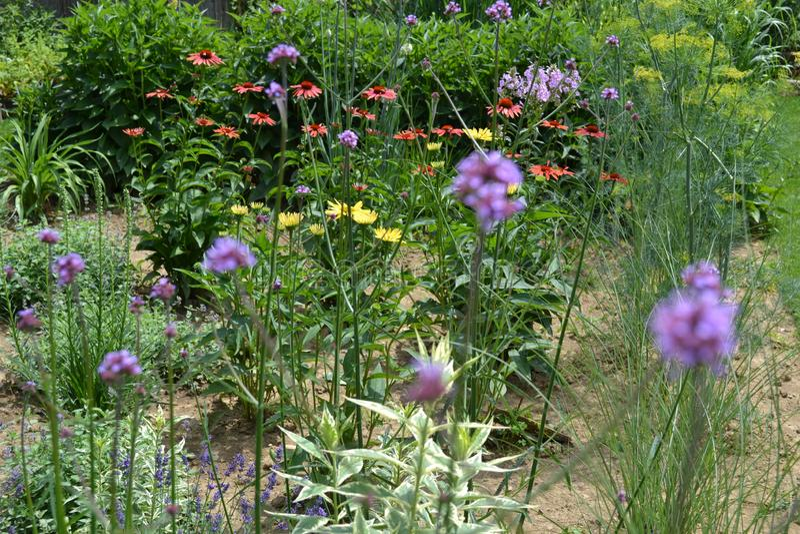 Jardim de flores com diferentes espécies de perenes e ervas fotografia de stock