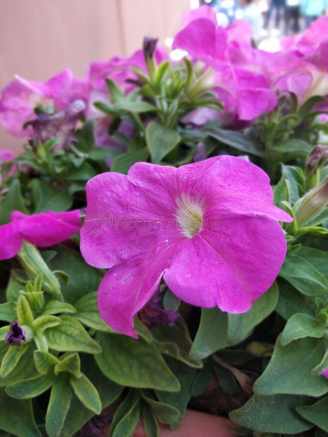 Jardim de flores cor-de-rosa foto de stock royalty free