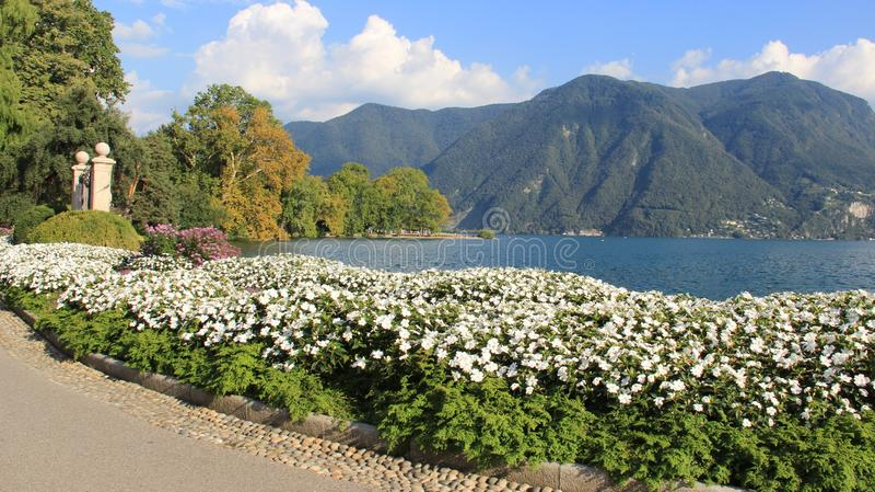 Jardim de flores do verão na beira do lago imagem de stock