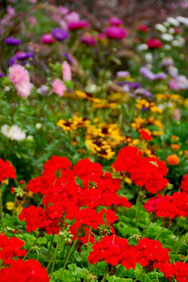 Jardim de florescência fotos de stock