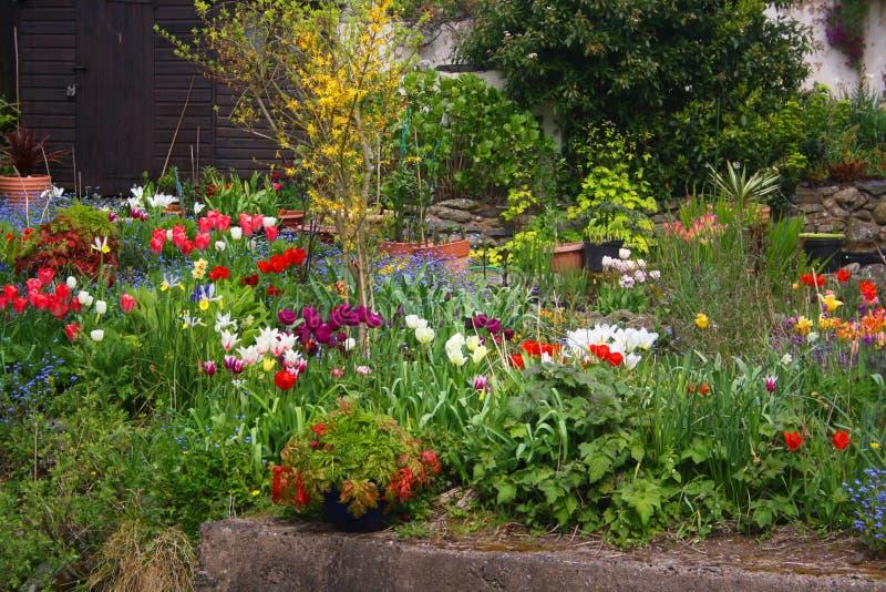 Jardim de florescência do verão das flores foto de stock