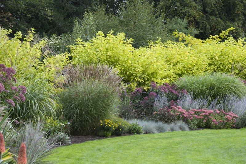 Jardim de florescência inglês foto de stock