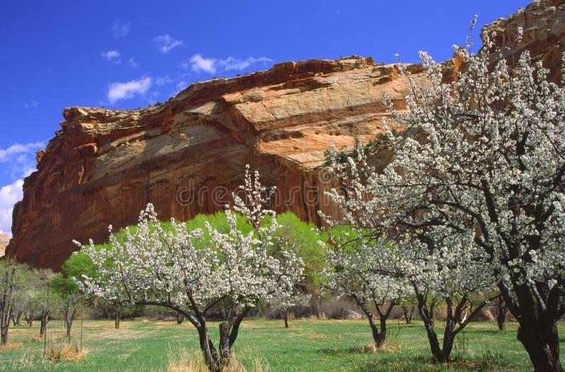 Jardim de Fruita em Canyonlands fotos de stock royalty free