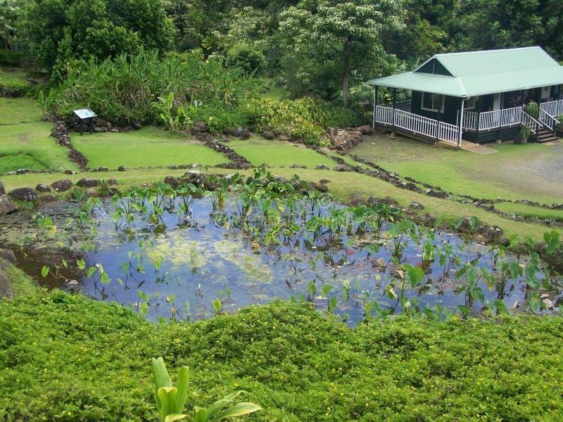 Jardim de Limahuli, Northshore Havaí imagem de stock royalty free