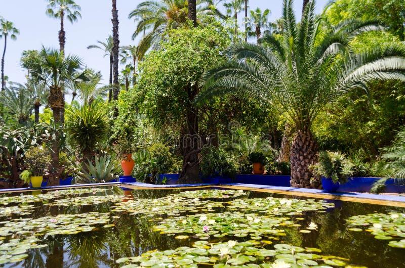 Jardim de Majorelle em C4marraquexe imagem de stock