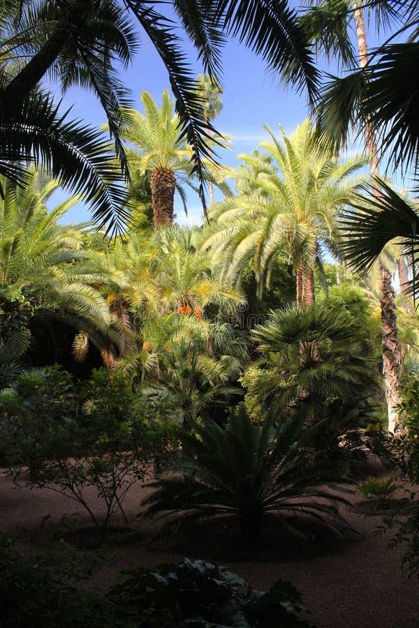 Jardim de Majorelle - palmeiras fotos de stock royalty free