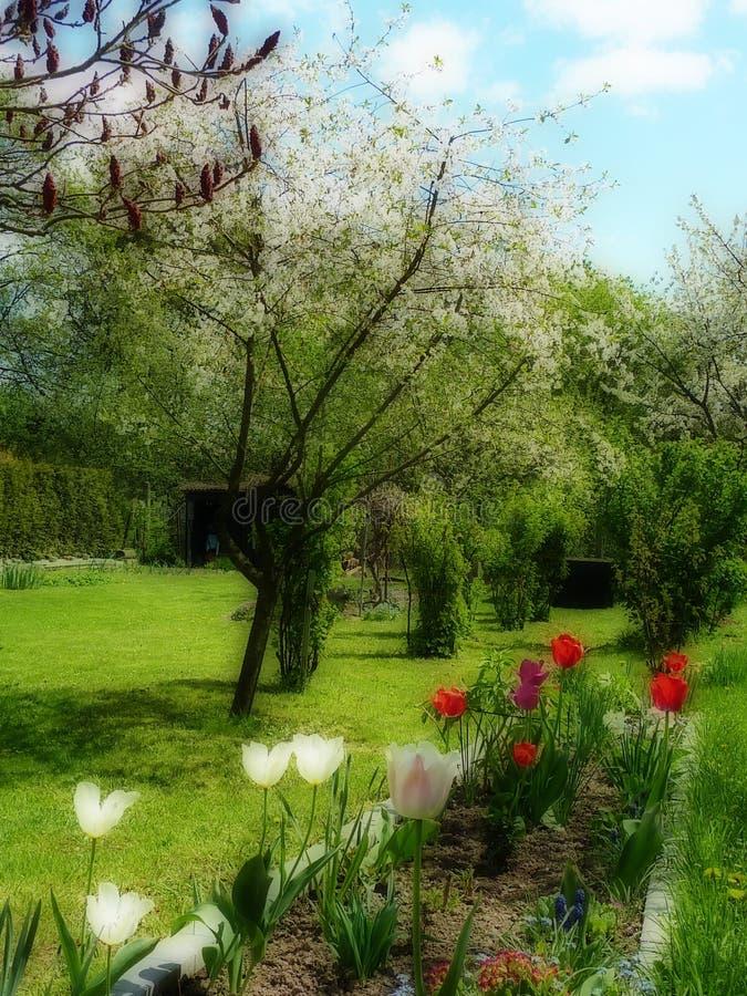 Jardim de Panoramatic na mola fotografia de stock royalty free
