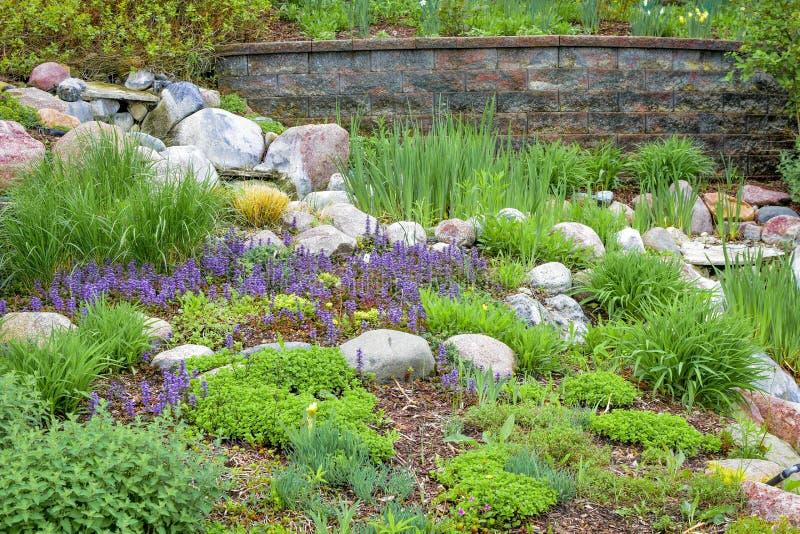 Jardim de rocha com flores roxas foto de stock royalty free