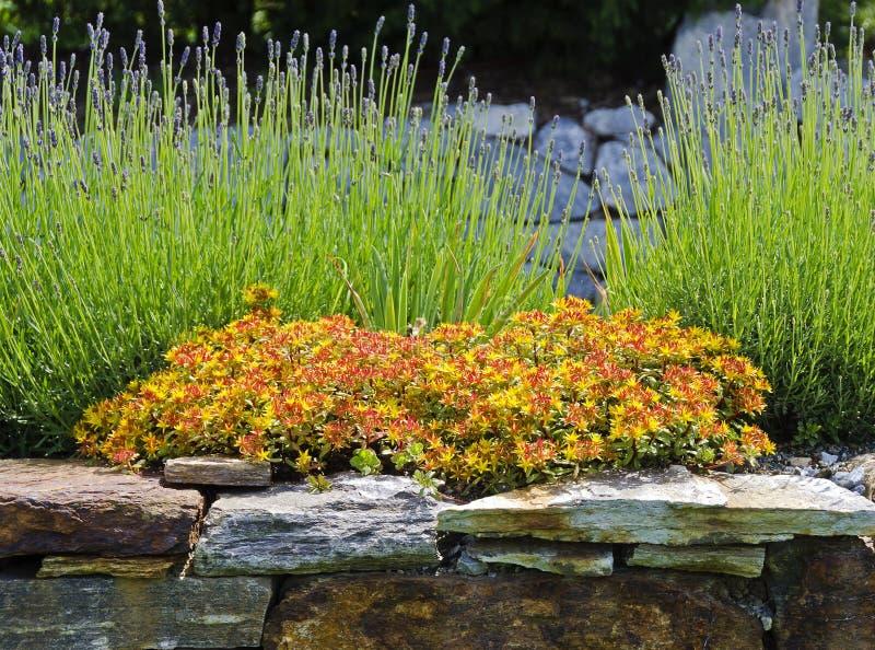 Jardim de rocha de florescência imagens de stock