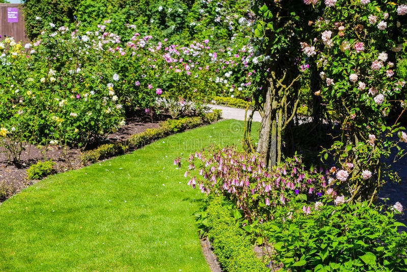 Jardim de rosas bonito no verão, Reino Unido foto de stock royalty free