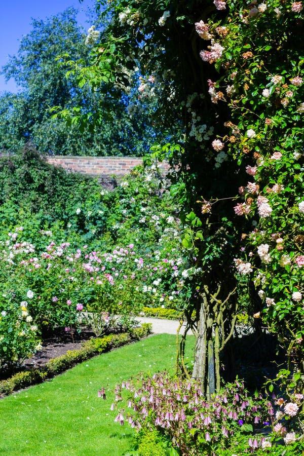 Jardim de rosas bonito no verão, Reino Unido fotos de stock royalty free