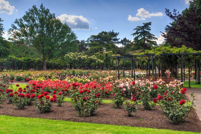 Jardim de rosas em um parque, com centenas de flores fotos de stock