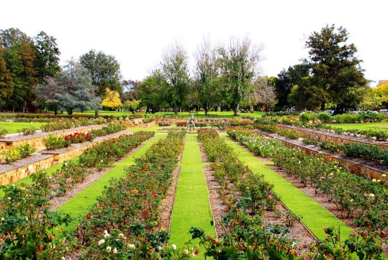 Jardim de rosas formal, Adelaide, Austrália fotos de stock