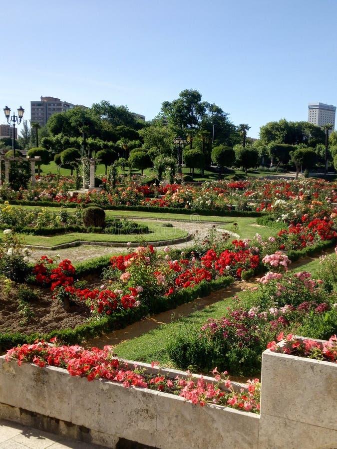 Jardim de rosas situado em Valladolid, Castilla y Leon, Espanha fotografia de stock