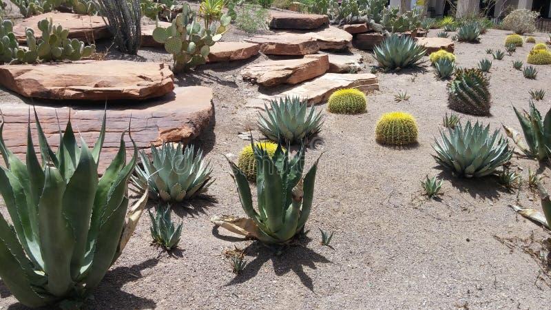 Jardim do cacto do deserto imagens de stock royalty free
