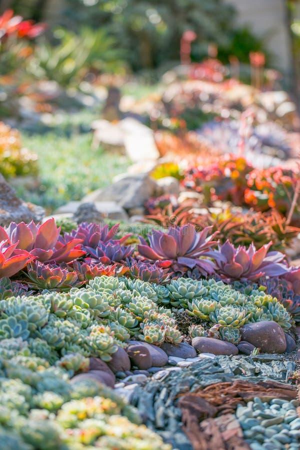 Jardim do deserto com plantas carnudas imagens de stock