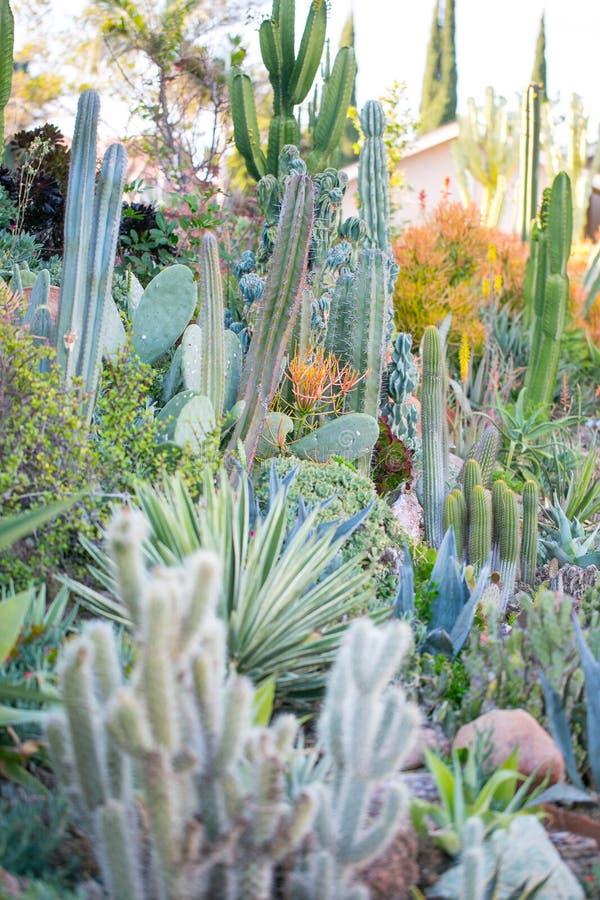 Jardim do deserto com plantas carnudas imagem de stock