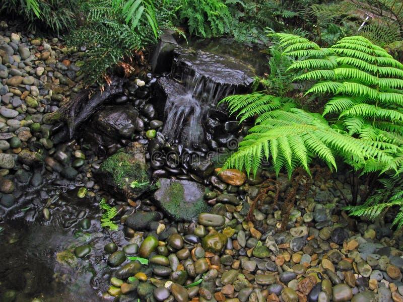 Jardim do Fern fotos de stock royalty free